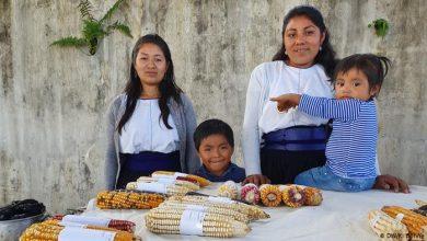 Photo of Традиционална храна и локални производи во Мексико