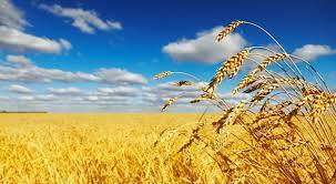 Photo of Ќе растат цените на нафтата и на пченицата