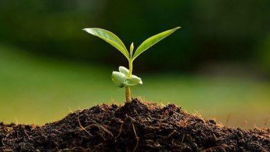 Photo of Калиумот и магнезиумот влијаат на квалитетот на растителното производство