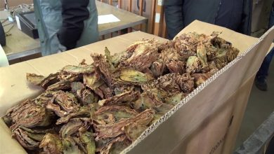 Photo of До крајот на месецов откуп на заостанатите 5 илјади тони тутун