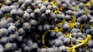 Photo of Исплатена помошта за лозарите кои имаа предадено а неисплатено грозје од винарниците