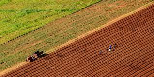 Photo of Минатата година најмногу се купувало земјоделско земјиште