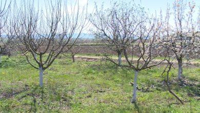 Photo of Зимска заштита на овошките