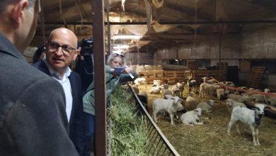 Photo of Денес на сметките на сточарите легнаа пари од субвенции за одгледување овци