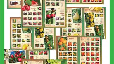 Photo of Пролетна понуда од АГРОУНИЈА- 75 разни видови садници од овошки, лози и ружи
