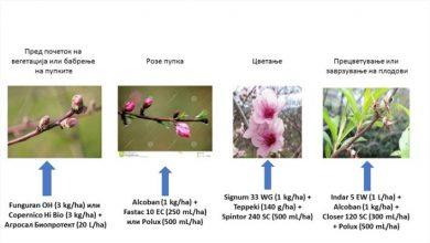 Photo of Заштита на праска, нектарина, вишна, цреша и слива до прецветување