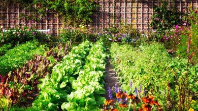 Photo of Зеленчукови растенија пријатели во градината