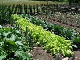 Photo of Исплатени субвенциите за сите земјоделци кои имаат обработлива површина до 1 хектар