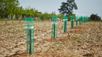 Photo of Како да ја подготвите почвата за садење ореви