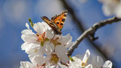 Photo of Пролетта е така прекрасна, но ако сме неодговорни некој од нас нема да ја види !
