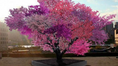 Photo of Неверојатно: Дрво со 40 различни видови овошје