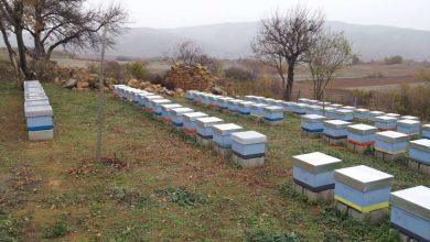 Photo of Пчеларите бараат дозволи да работат на пчеларниците