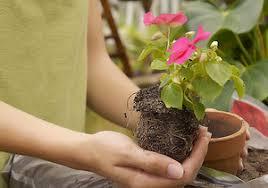 Photo of Создавање поволни услови за одгледување цвеќе