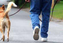 Photo of Kако да се постапува со домашните миленичиња во состојба на корона вирусот