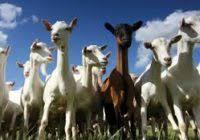 Photo of Земјоделски календар за месец март -животинско