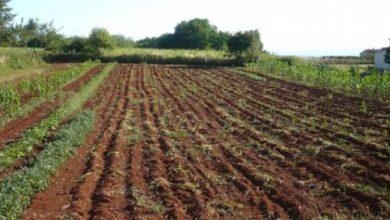Photo of Наскоро читајте-Се чуваме сами, најсигурен карантин од корона вирусот е земјоделието, велат земјоделците