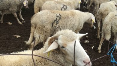 Photo of Во Дебарско за субвенции аплицирале 693 земјоделци
