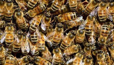 Photo of Исплатени субвенциите за пчеларите