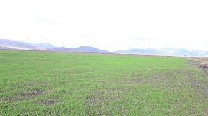 Photo of Дождот позитивно ќе се одрази на развојот на есенските посеви