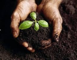 Photo of Пресадување на растенијата