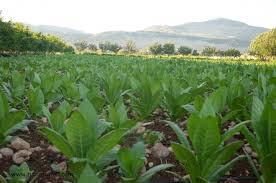 Photo of АПРЗ лани советувала 30.950 земјоделци