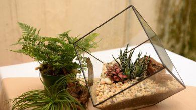 Photo of Како да се направи мини- градина во стакло