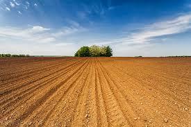 Photo of Земјоделски календар за месец март – растително