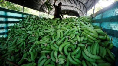 Photo of Пандемијата ќе не остави без банани