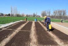 Photo of Николче Талевски-Корона кризата не е пречка за подготовки за новото производство на тутунот