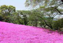 Photo of Сопругот и засадил цело поле со цвеќиња, за неговата слепа жена за да може барем да ги мириса