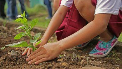 Photo of 7 Основни правила за подигнување за органска градина (за почетници)