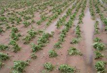 Photo of Општина Могила заедно со државата помагаат кај земјоделците во овие тешки мигови