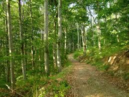 Photo of МЗШВ: Од утре се укинува забраната за движење во шума и шумско земјиште