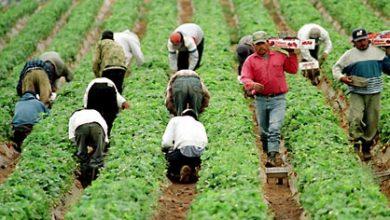 Photo of На Шпанија и се потребни илјадници сезонски работници