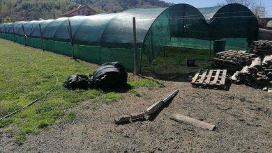 Photo of Одгледувањето полжави станува профитабилна гранка во земјоделството
