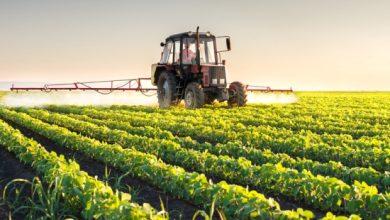 Photo of Илјадници Британци ќе мора да помогнат за собирање на приносите во земјоделството
