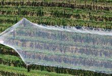 Photo of Во Франција 200.000 граѓани се пријавиле за помош на земјоделците