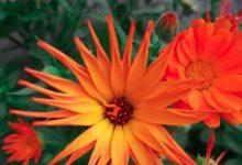 Photo of Пролетни убавини во двор