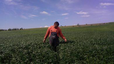 Photo of Производство на семе за житарици предизвик за младите земјоделци