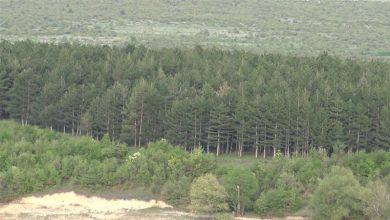 Photo of Боров Четник се заканува да уништи огромни површини шума кај Прилеп