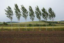 Photo of Фотогалерија од полето во Св. Николе