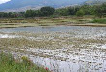 Photo of Оризови полиња низ објективот на Зелена берза