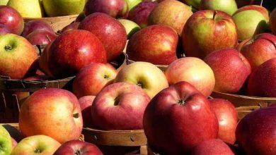 Photo of Се подигаат нови насади: карантинот донесе бенефити за овоштарите во Ресен и Преспа