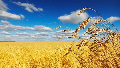 Photo of Во услови на изобилство на храна, ФАО утврдува прекини во дистрибуцијата за време на пандемијата КОВИД-19