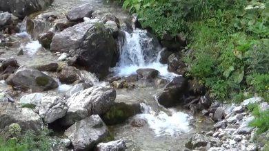 Photo of По две децении иницијативата за прогласување за национален парк, Шара влезе во институциите на системот