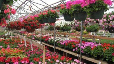 """Photo of Проект наменет за производителите на цвеќе: """"Засади цвеќе со Тераграмин!"""""""