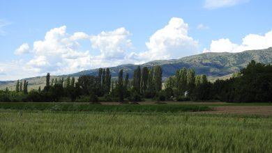 Photo of Пелагонија во атарот на с.Ново Змирнево (фотогалерија)