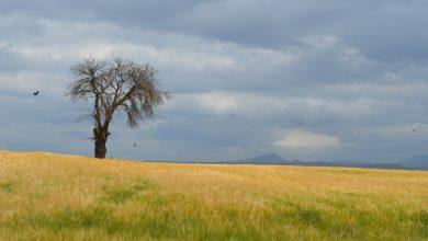 Photo of Убавините на Пелагонија (Фотогалерија)