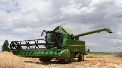 Photo of Русија очекува поголеми  приноси на пченица, а Романија има проблеми заради дождовите