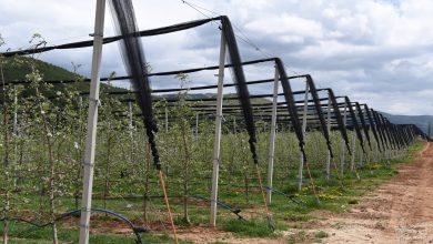 Photo of Опрема за заштита од град во овоштарството сега и на македонскиот пазар